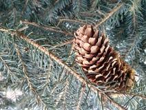 Χριστουγεννιάτικο δέντρο στη μακροεντολή με τον κώνο στο κέντρο Στοκ φωτογραφία με δικαίωμα ελεύθερης χρήσης