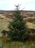 Χριστουγεννιάτικο δέντρο στο έλος τύρφης, Sally Gap, κομητεία Wicklow 2 Στοκ εικόνα με δικαίωμα ελεύθερης χρήσης