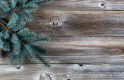 Χριστουγεννιάτικο δέντρο στο αγροτικό ξύλο Στοκ φωτογραφίες με δικαίωμα ελεύθερης χρήσης