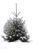 Χριστουγεννιάτικο δέντρο στο hoarfrost ενάντια στο άσπρο χιόνι Στοκ εικόνα με δικαίωμα ελεύθερης χρήσης