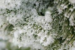 Χριστουγεννιάτικο δέντρο στο hoarfrost Σιβηρία Στοκ Εικόνες