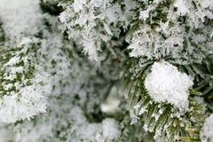 Χριστουγεννιάτικο δέντρο στο hoarfrost Σιβηρία Στοκ φωτογραφία με δικαίωμα ελεύθερης χρήσης