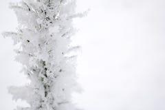 Χριστουγεννιάτικο δέντρο στο hoarfrost Σιβηρία Στοκ Φωτογραφία