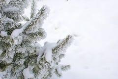 Χριστουγεννιάτικο δέντρο στο hoarfrost Σιβηρία Στοκ φωτογραφίες με δικαίωμα ελεύθερης χρήσης