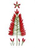 Χριστουγεννιάτικο δέντρο φιαγμένο από τσίλι Στοκ Φωτογραφίες