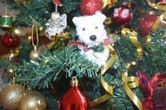 Χριστουγεννιάτικο δέντρο, ημέρα των Χριστουγέννων στοκ εικόνες
