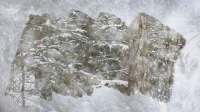 Χριστουγεννιάτικο δέντρο κάτω από το πεσμένο χιόνι απεικόνιση αποθεμάτων
