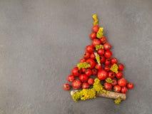 Χριστουγεννιάτικο δέντρο με τα μούρα Στοκ φωτογραφία με δικαίωμα ελεύθερης χρήσης