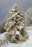 Χριστουγεννιάτικο δέντρο στα βουνά στοκ εικόνες