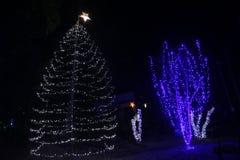 Χριστουγεννιάτικο δέντρο στην Ινδία στη ημέρα των Χριστουγέννων Στοκ φωτογραφία με δικαίωμα ελεύθερης χρήσης