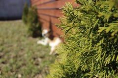Χριστουγεννιάτικο δέντρο στο υπόβαθρο του φράκτη στοκ φωτογραφία με δικαίωμα ελεύθερης χρήσης