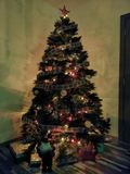 Χριστουγεννιάτικο δέντρο Pefrect για τον οικογενειακό χρόνο στοκ φωτογραφία