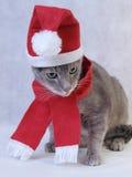 Χριστούγεννα γατών γκρίζα Στοκ εικόνα με δικαίωμα ελεύθερης χρήσης