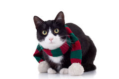 Χριστούγεννα γατών Στοκ Εικόνα