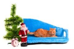 Χριστούγεννα γατών Στοκ φωτογραφίες με δικαίωμα ελεύθερης χρήσης
