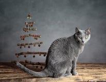 Χριστούγεννα γατών Στοκ εικόνες με δικαίωμα ελεύθερης χρήσης