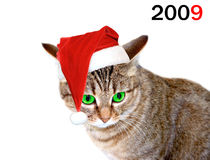 Χριστούγεννα γατών Στοκ φωτογραφία με δικαίωμα ελεύθερης χρήσης