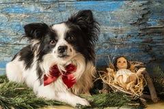 Χριστούγεννα Ιησούς και σκυλί Στοκ εικόνα με δικαίωμα ελεύθερης χρήσης