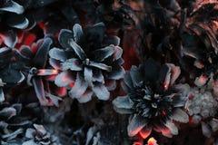 Χριστούγεννα και νέο έτος imege κάρτα Δασικοί κώνοι του FIR στην πυρκαγιά Στοκ Φωτογραφία