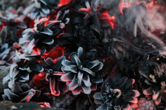 Χριστούγεννα και νέο έτος imege κάρτα Δασικοί κώνοι του FIR στην πυρκαγιά Στοκ εικόνες με δικαίωμα ελεύθερης χρήσης