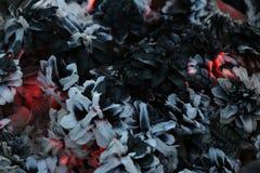 Χριστούγεννα και νέο έτος imege κάρτα Δασικοί κώνοι του FIR στην πυρκαγιά Στοκ Εικόνες