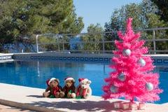 Χριστούγεννα καλές διακ& Τρία Santa αντέχουν και ένα ρόδινο χριστουγεννιάτικο δέντρο από την πισίνα στοκ εικόνες