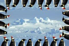 Χριστούγεννα καρτών penguin Στοκ Εικόνα