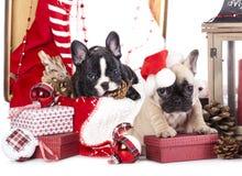 Χριστούγεννα κουταβιών στοκ εικόνες με δικαίωμα ελεύθερης χρήσης