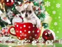 Χριστούγεννα κουταβιών Στοκ εικόνα με δικαίωμα ελεύθερης χρήσης