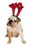 Χριστούγεννα μπουλντόγκ Στοκ εικόνες με δικαίωμα ελεύθερης χρήσης