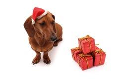 Χριστούγεννα σκυλιών στοκ εικόνες
