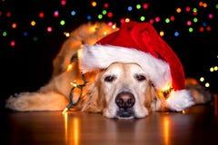 Χριστούγεννα 2 σκυλακιών Στοκ Εικόνες