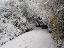 Χριστούγεννα στη χιονώδη Κολωνία, Γερμανία στοκ εικόνα με δικαίωμα ελεύθερης χρήσης