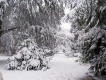 Χριστούγεννα στη χιονώδη Κολωνία, Γερμανία στοκ εικόνες