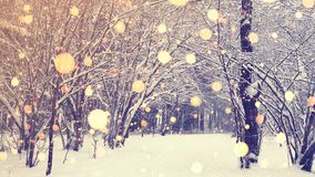 Χριστούγεννα στο Winter Park με ελαφριά snowflakes Στοκ εικόνες με δικαίωμα ελεύθερης χρήσης