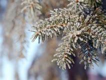 Χριστούγεννα, χειμερινό υπόβαθρο με το παγωμένο δέντρο πεύκων Εποχιακό σκηνικό για το σχέδιο ευχετήριων καρτών ή αφισών Στοκ Φωτογραφία