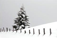 Χριστούγεννα Στοκ Εικόνα