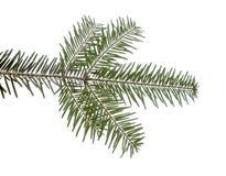 Χριστούγεννα 7 Στοκ Εικόνες