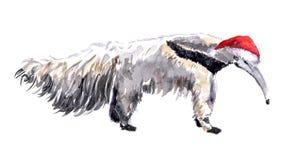 Χριστούγεννα anteater στο κόκκινο santa& x27 καπέλο του s Ζώο Watercolor Στοκ Εικόνα