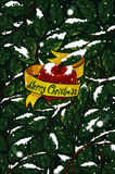 Χριστούγεννα Apple και χιόνι Στοκ Φωτογραφίες