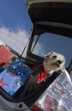 Χριστούγεννα doggie Στοκ εικόνες με δικαίωμα ελεύθερης χρήσης