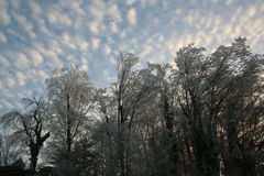 Χριστούγεννα mornig Στοκ Εικόνες