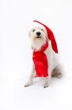 Χριστούγεννα schnauzer Στοκ φωτογραφία με δικαίωμα ελεύθερης χρήσης