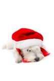 Χριστούγεννα schnauzer Στοκ Εικόνες