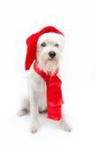 Χριστούγεννα schnauzer Στοκ εικόνες με δικαίωμα ελεύθερης χρήσης