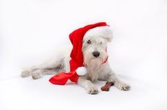 Χριστούγεννα schnauzer Στοκ εικόνα με δικαίωμα ελεύθερης χρήσης