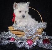 Χριστούγεννα westie Στοκ φωτογραφίες με δικαίωμα ελεύθερης χρήσης