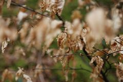 Χρονικά παλαιά φύλλα άνοιξη Στοκ εικόνες με δικαίωμα ελεύθερης χρήσης