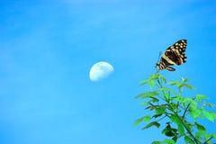 Χρονική έννοια άνοιξη, όμορφη πεταλούδα, φεγγάρι και κενή περιοχή για  στοκ εικόνα