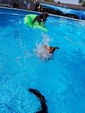 Χρονική διασκέδαση λιμνών με τα σκυλιά Στοκ Εικόνες